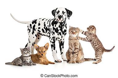 gruppo, collage, veterinario, isolato, petshop, animali domestici, animali, o