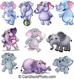 gruppo, elefanti