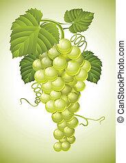 gruppo, foglie, uva, verde