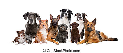 gruppo, nove, cani