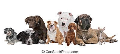gruppo, otto, cani