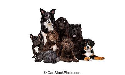gruppo, otto, macchina fotografica, dall'aspetto, cani
