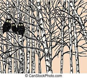 gufi, immagine, vettore, foresta, betulla
