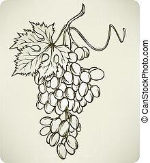 hand-drawing, vettore, uva, illustration.