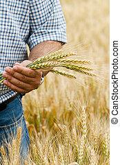 hands., contadino, frumento