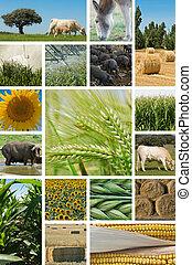 husbandry., agricoltura, animale