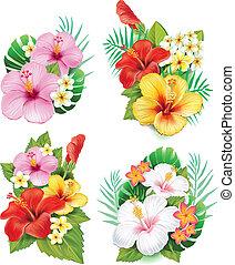 ibisco, fiori, disposizione