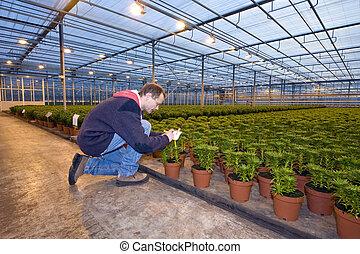 identificare, piante