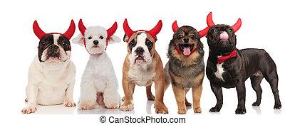 il portare, divertente, diavolo, gruppo, cinque, corna, cani, rosso