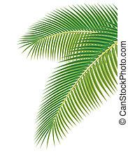 illustration., foglie, albero, fondo., vettore, palma, bianco