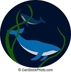 illustrazione, fondo, fondo., vettore, mare, balena, bianco