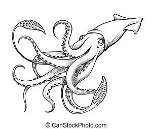 illustrazione, incisione, calamaro, gigante