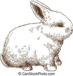 illustrazione, incisione, coniglietto, lanuginoso