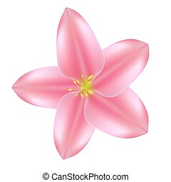 illustrazione, realistico, bello, fiore, rosa, vettore, 3d, icon., sprind, estate, eps10