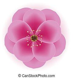 illustrazione, realistico, fiore, vettore, prugna, icon., 3d, eps10