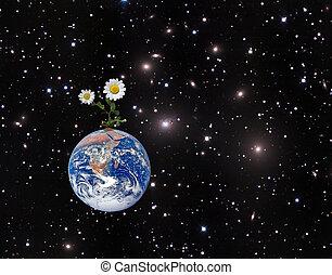 immagine, elementi, nasa, earth., ammobiliato, fiore, questo