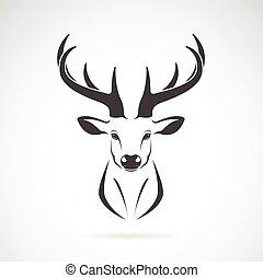 immagine, vettore, disegno, sfondo bianco, cervo, testa