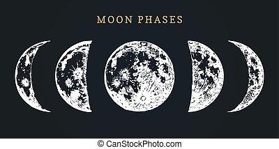 immagine, vettore, fondo., nuovo, fasi, nero, mano, disegnato, ciclo, luna, pieno, illustrazione