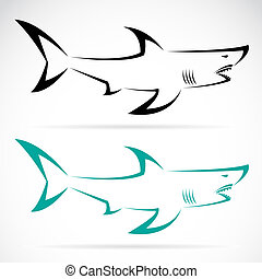 immagine, vettore, squalo
