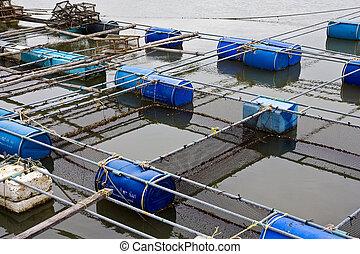 impresa piscicolture