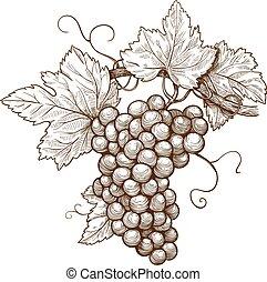 incisione, uva, ramo