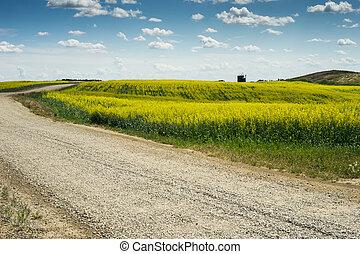 incrocio, campo, strada ghiaia, canola