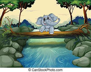 incrocio, fiume, elefante