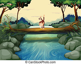 incrocio, fiume, scimmia