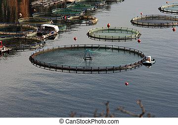 industria pesca