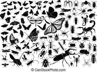 insetti, 100