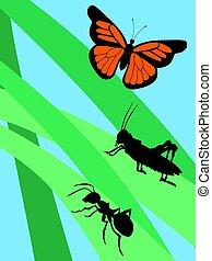 insetti, erba