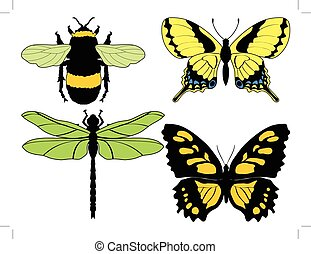 insetti, illustrazioni, differente, set, vettore