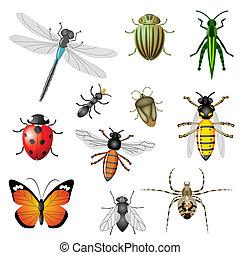insetti, o, errori del software
