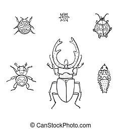 insetti, scarabocchiare, hand-drawn, set