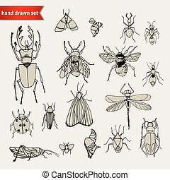 insetti, schizzo, set, scarabocchiare