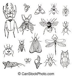 insetti, schizzo, set