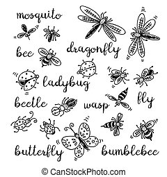 insetti, set, scarabocchiare