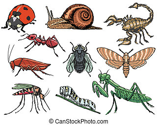 insetti, set