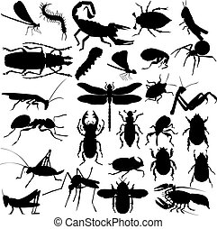 insetti, silhouette