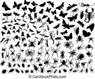 insetti, vettore