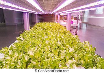 interno, hydroponic, verdura, tecnologia, condotto, luce, organico, fattoria, crescere