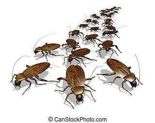 invasione, scarafaggio