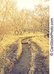 inverno, effect., vendemmia, immagine, albero, ), (, islanda, filtrato, paesaggio, trattato