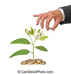 investimento verde, affari