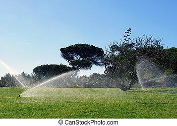 irrigazione, automatico, giardino