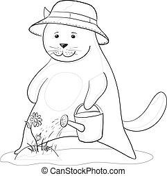 irrigazione, fiore, contorni, gatto