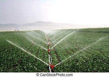 irrigazione, immagine, gocciolamento, campo, sistemi, agricolo