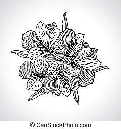 isolated., macro, fiore, nero, orchidea