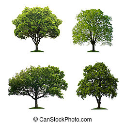 isolato, albero