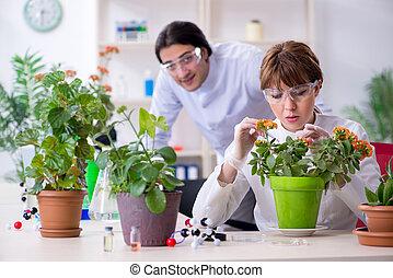 laboratorio, botanico, due, lavorativo, giovane